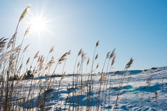 Winter field . Beautiful sunny day. Clear blue sky Royalty Free Stock Photo