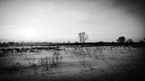 Winter field Stock Images