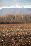 Winter Field, Friuli Royalty Free Stock Images