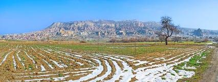The winter field Stock Photo