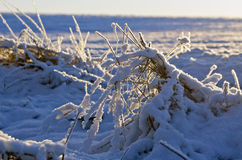 Winter field with hoarfrost snow and morning sunrise Stock Photography