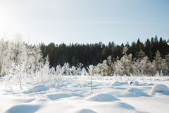 Winter field landscape with the frosty trees lit by soft sunset light - snowy landscape scene in warm tones Stock Image