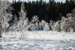 Winter field landscape with the frosty trees lit by soft sunset light - snowy landscape scene in warm tones. With snow covered field and trees covered with royalty free stock photo