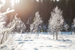 Winter field landscape with the frosty trees lit by soft sunset light - snowy landscape scene in warm tones. With snow covered field and trees covered with stock photography