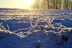 Winter field and morning sunrise sunlight Royalty Free Stock Photo