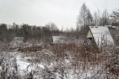 Winter field near the forest Royalty Free Stock Photo