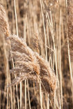 Winter Field in Ontario close-up Stock Image