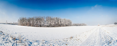 Winter field panorama Stock Images
