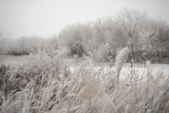 Winter and field Royalty Free Stock Photo