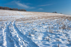 Winter Field Road. Road at snow covered field with blue sky stock image