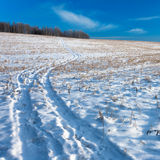 Winter Field Road. Road at snow covered field with blue sky stock photo