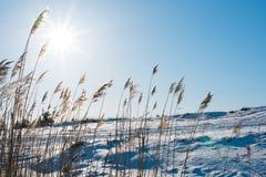 Winter field Schöner sonniger Tag Klarer blauer Himmel Lizenzfreies Stockfoto