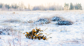 Winter field Royalty Free Stock Photography