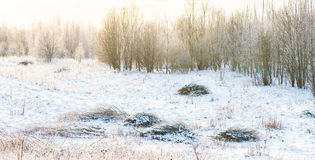 Winter field Stock Photography