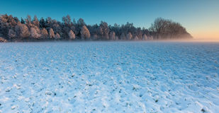 Winter field at sunrise Stock Photo