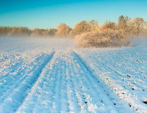 Winter field at sunrise Stock Photography