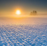 Winter field at sunrise Royalty Free Stock Photo
