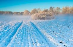 Winter field at sunrise Royalty Free Stock Photo