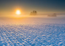 Winter field at sunrise Stock Image