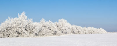 Winter field surrounded by trees Royalty Free Stock Photography