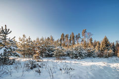 Winter field under blue sky Stock Images