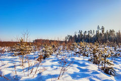 Winter field under Stock Photo