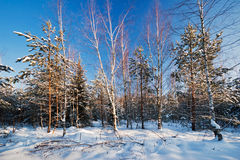 Winter field under Royalty Free Stock Photography