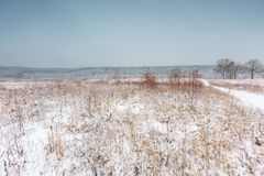 Winter field under cloudy gray sky Stock Images
