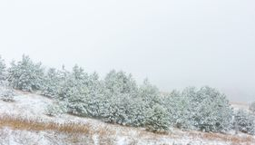Winter field under cloudy gray sky Stock Image