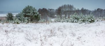 Winter field under cloudy gray sky Royalty Free Stock Photo