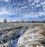 Winter field under nice sky Stock Image