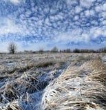 Winter field under nice sky Stock Image