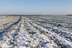 Winter on field. Royalty Free Stock Photos