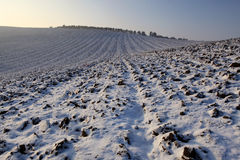 Winter fields Stock Photo