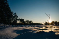 Winter fields sunset with snow. And with shadows from snow drifts. Colorful landscape of sunset in winter Royalty Free Stock Image