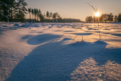 Winter fields sunset with snow. And with shadows from snow drifts. Colorful landscape of sunset in winter Royalty Free Stock Photo