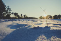 Winter fields sunset with snow. And with shadows from snow drifts. Colorful landscape of sunset in winter Stock Photos