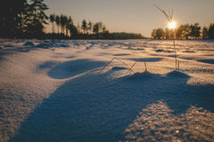 Winter fields sunset with snow Stock Image