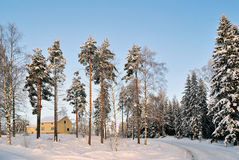 Winter in Finland Royalty Free Stock Image