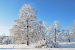 Winter in Finland Royalty Free Stock Photography