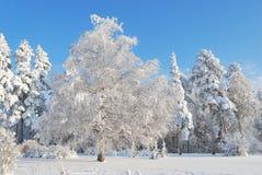 Winter in Finnland Lizenzfreie Stockfotografie