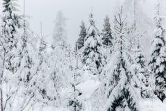 Winter in Finnland bedeckte im Schnee stockbild