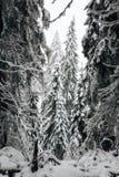 Winter in Finnland bedeckte im Schnee lizenzfreie stockfotografie