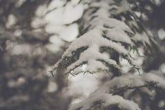 Winter fir Stock Images