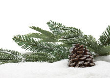Winter fir cone Stock Images