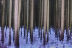 Winter fir forest abstract Royalty Free Stock Photography