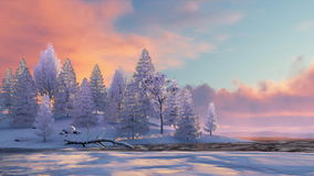 Winter fir forest and frozen river at sunset 4K. Peaceful winter scenery with snowy fir tree forest on shore of frozen river among snowdrifts under scenic stock video