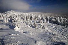 Winter fir forest in mountains. At Urals, Russia Royalty Free Stock Photo