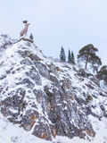 Winter fir forest in mountains with deer statue Royalty Free Stock Photography