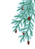 Winter fir Royalty Free Stock Photos